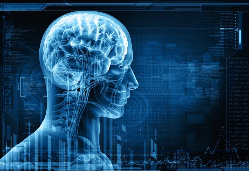 human-brain-illustration